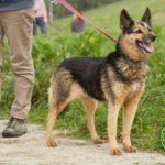 Świąteczna zbiórka dla zwierząt w Bielsku-Białej