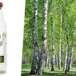 Brzoza – drzewo o niezwykłych właściwościach