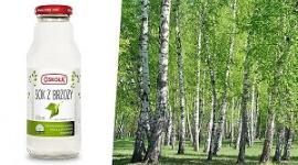 Brzoza – drzewo o niezwykłych właściwościach LIFESTYLE, Żywienie - Brzoza, czyli z łacińskiego Betula – to rodzaj drzew i krzewów zaliczanych do rodziny brzozowatych, które już w medycynie ludowej były uważane za wyjątkowo przychylne człowiekowi.