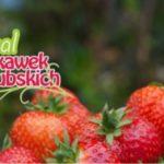 Podczas Festiwalu Truskawek Kaszubskich po raz kolejny będą ustanawiać rekord