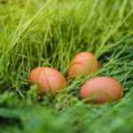 Numery budzące kontrowersje. Jaja 0,1,2,3 – które kury są najszczęśliwsze?